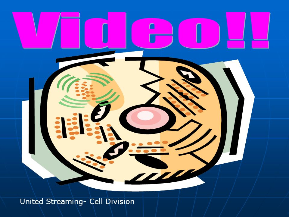 Video!! United Streaming- Cell Division