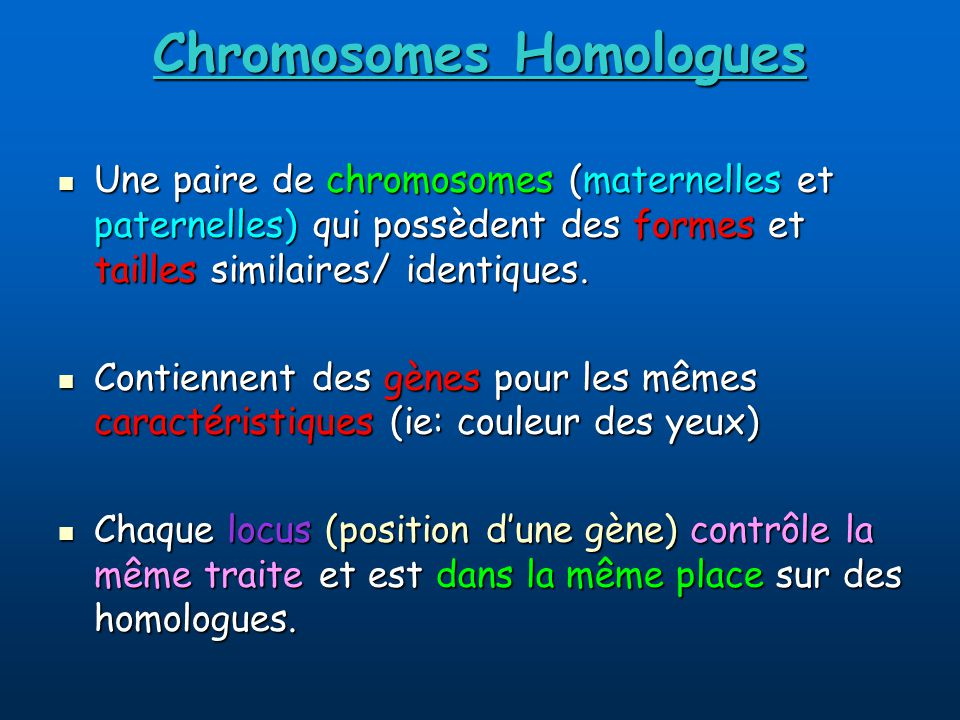Chromosomes Homologues
