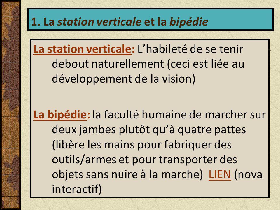 1. La station verticale et la bipédie
