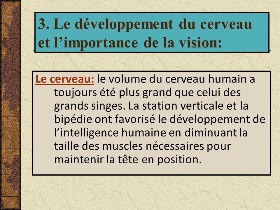 3. Le développement du cerveau et l'importance de la vision: