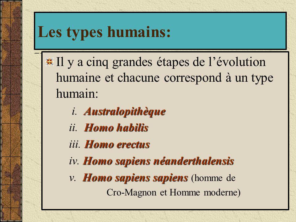 Les types humains: Il y a cinq grandes étapes de l'évolution humaine et chacune correspond à un type humain:
