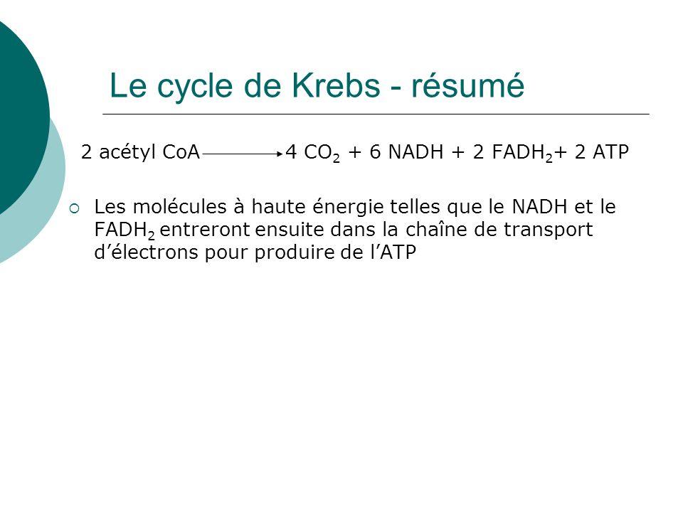 Le cycle de Krebs - résumé