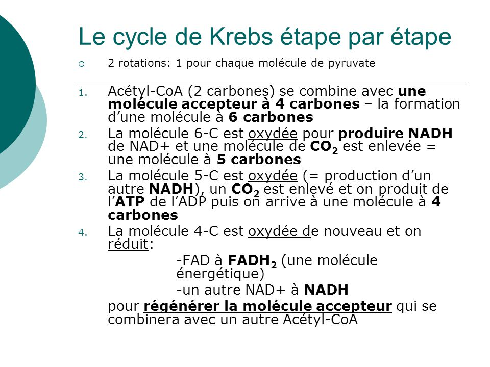 Le cycle de Krebs étape par étape