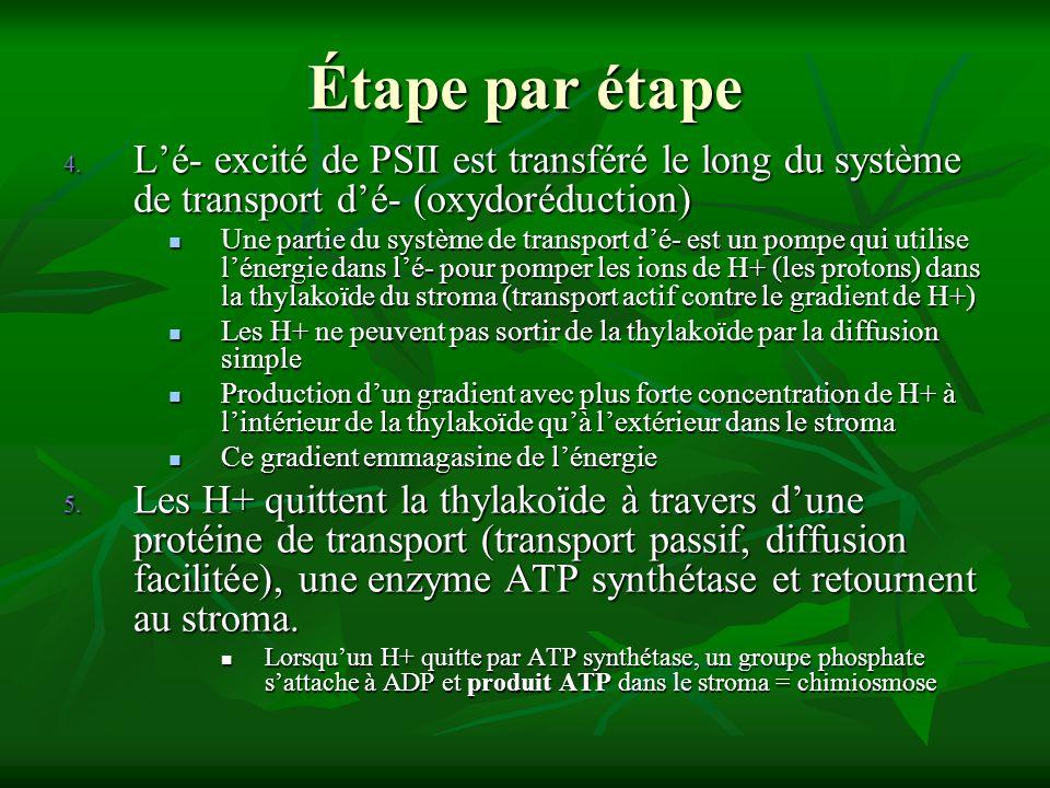 Étape par étape L'é- excité de PSII est transféré le long du système de transport d'é- (oxydoréduction)