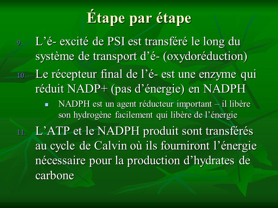 Étape par étape L'é- excité de PSI est transféré le long du système de transport d'é- (oxydoréduction)