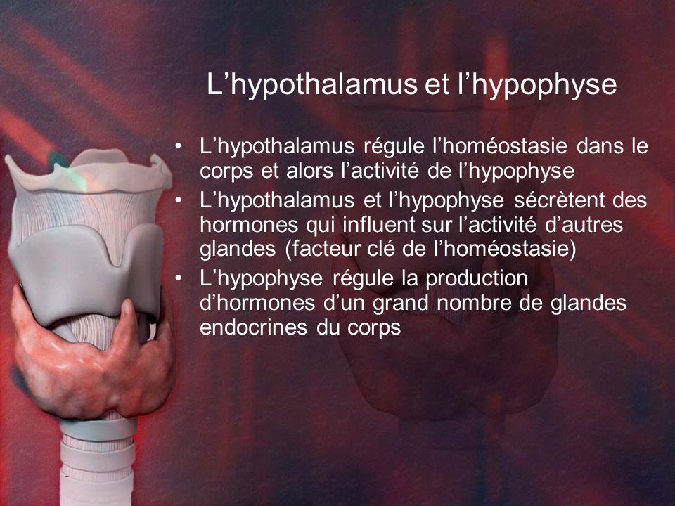 L'hypothalamus et l'hypophyse
