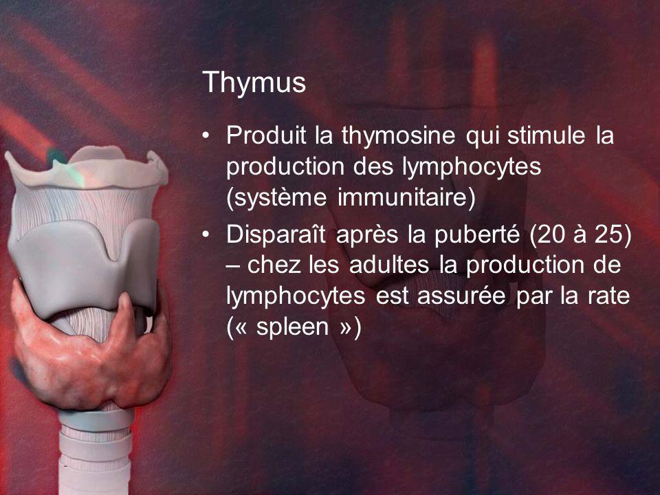 Thymus Produit la thymosine qui stimule la production des lymphocytes (système immunitaire)