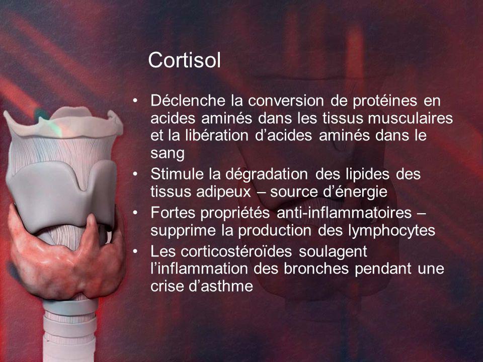 Cortisol Déclenche la conversion de protéines en acides aminés dans les tissus musculaires et la libération d'acides aminés dans le sang.