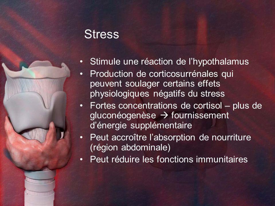 Stress Stimule une réaction de l'hypothalamus