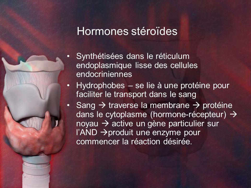 Hormones stéroïdes Synthétisées dans le réticulum endoplasmique lisse des cellules endocriniennes.