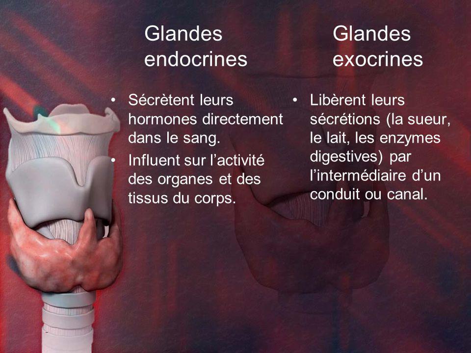 Glandes Glandes endocrines exocrines
