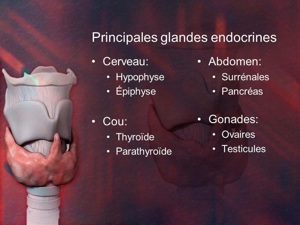 Principales glandes endocrines