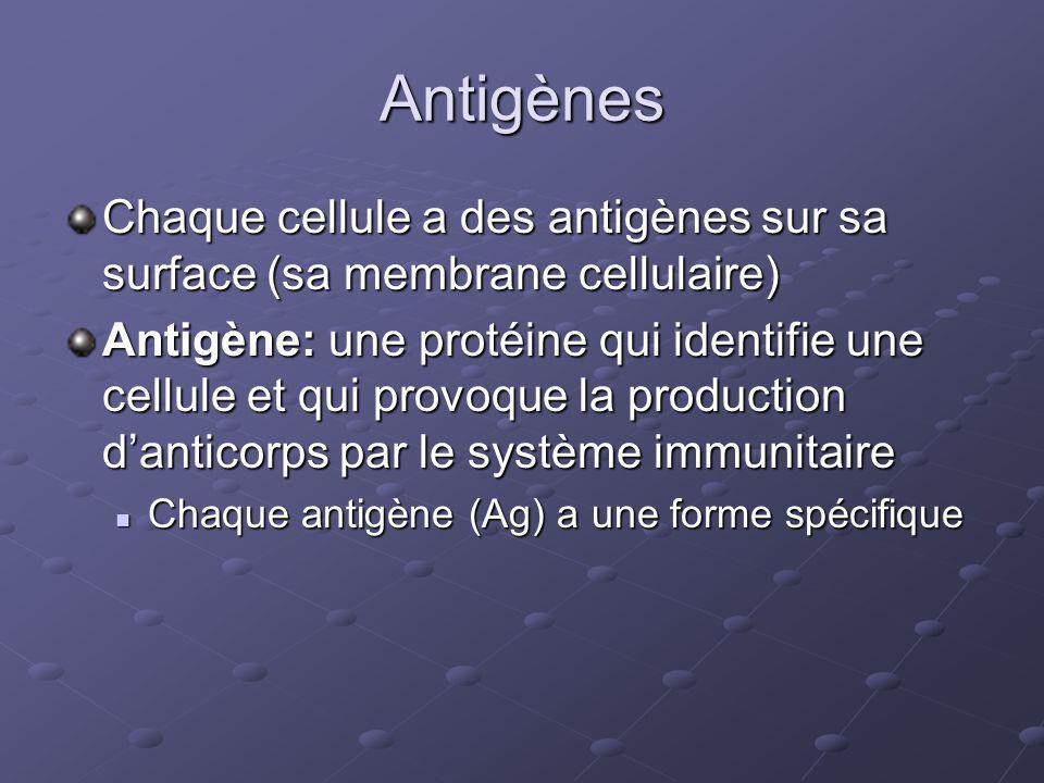 Antigènes Chaque cellule a des antigènes sur sa surface (sa membrane cellulaire)
