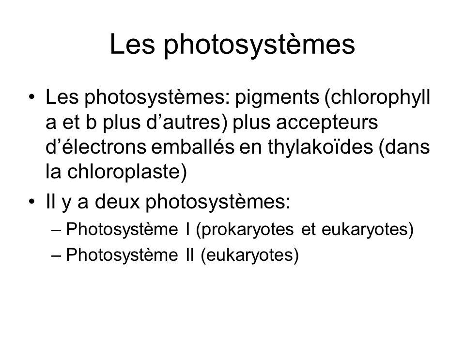 Les photosystèmes