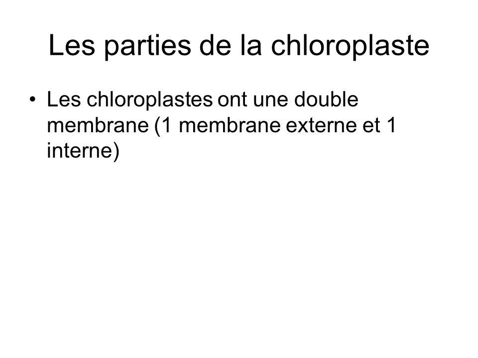 Les parties de la chloroplaste