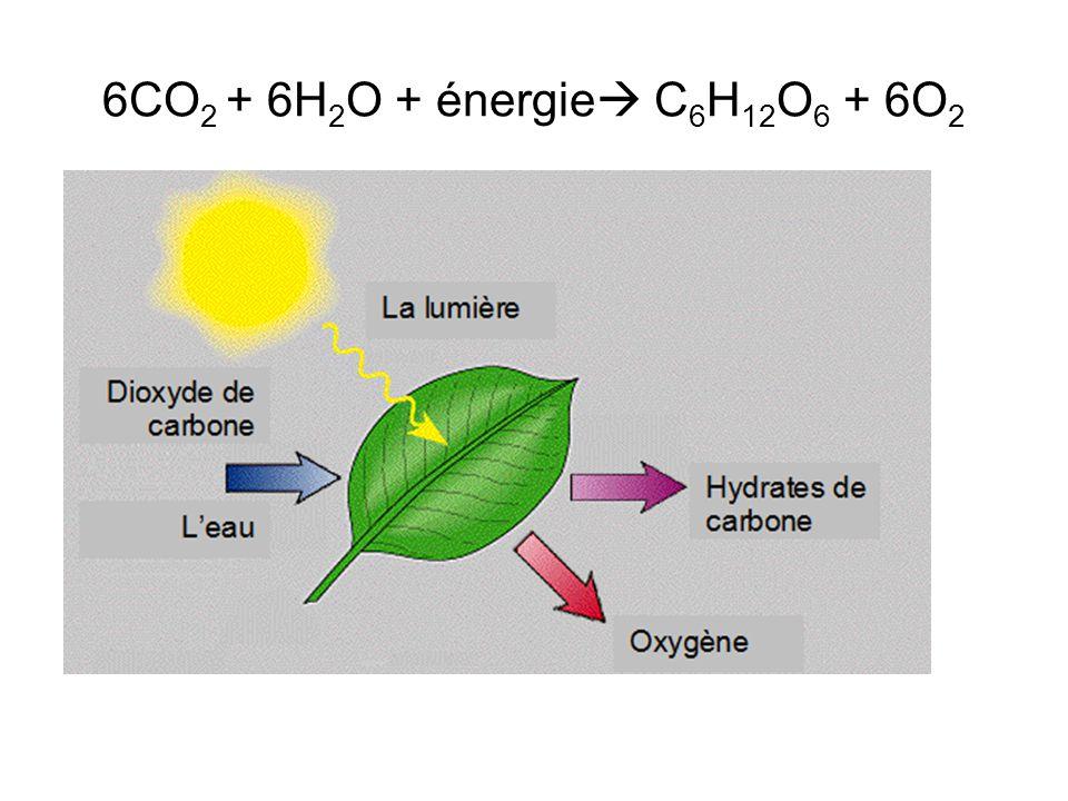 6CO2 + 6H2O + énergie C6H12O6 + 6O2