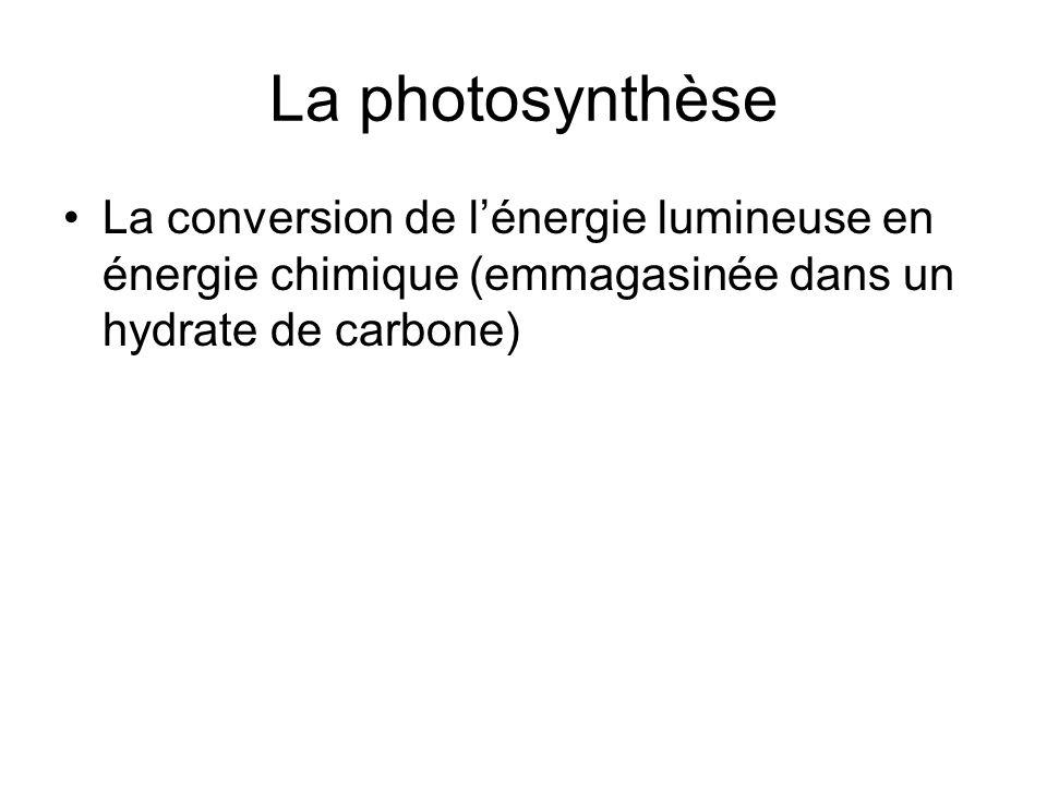 La photosynthèse La conversion de l'énergie lumineuse en énergie chimique (emmagasinée dans un hydrate de carbone)