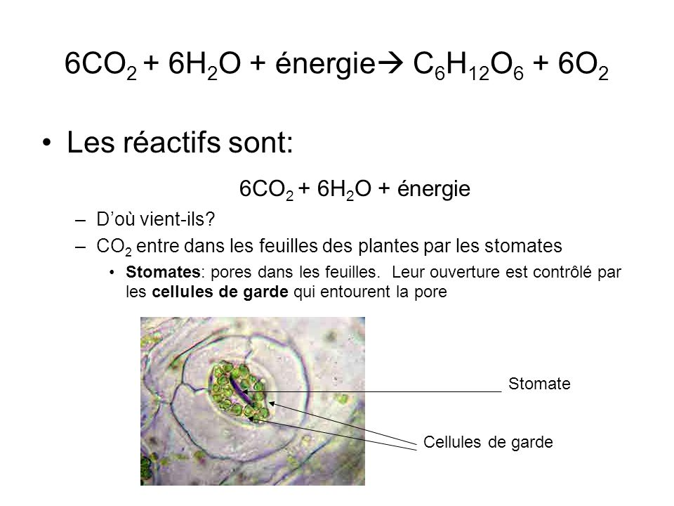 6CO2 + 6H2O + énergie C6H12O6 + 6O2 Les réactifs sont: