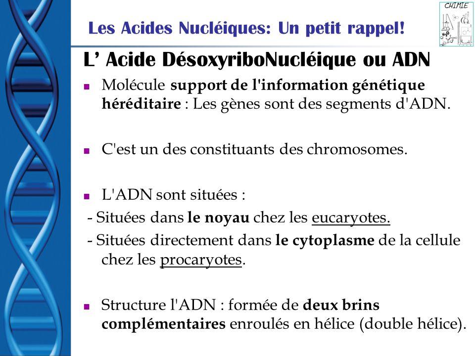 Les Acides Nucléiques: Un petit rappel!