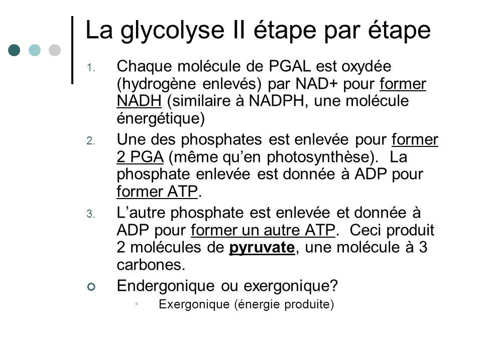 La glycolyse II étape par étape