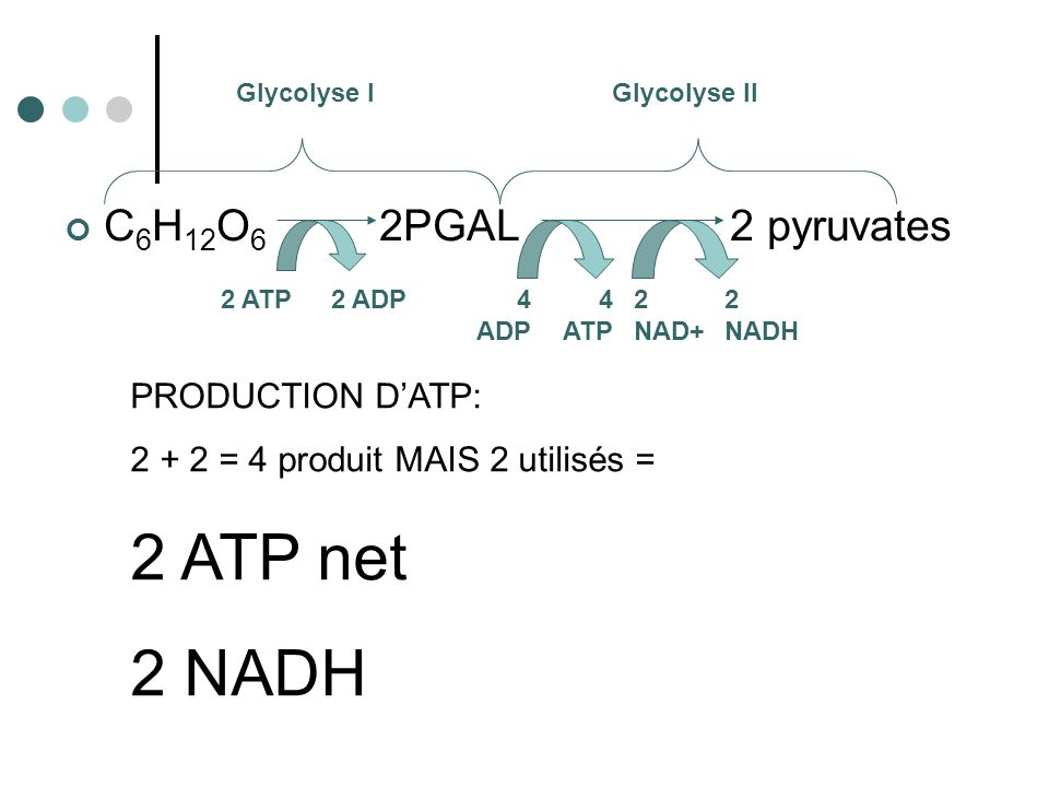 2 ATP net 2 NADH C6H12O6 2PGAL 2 pyruvates PRODUCTION D'ATP:
