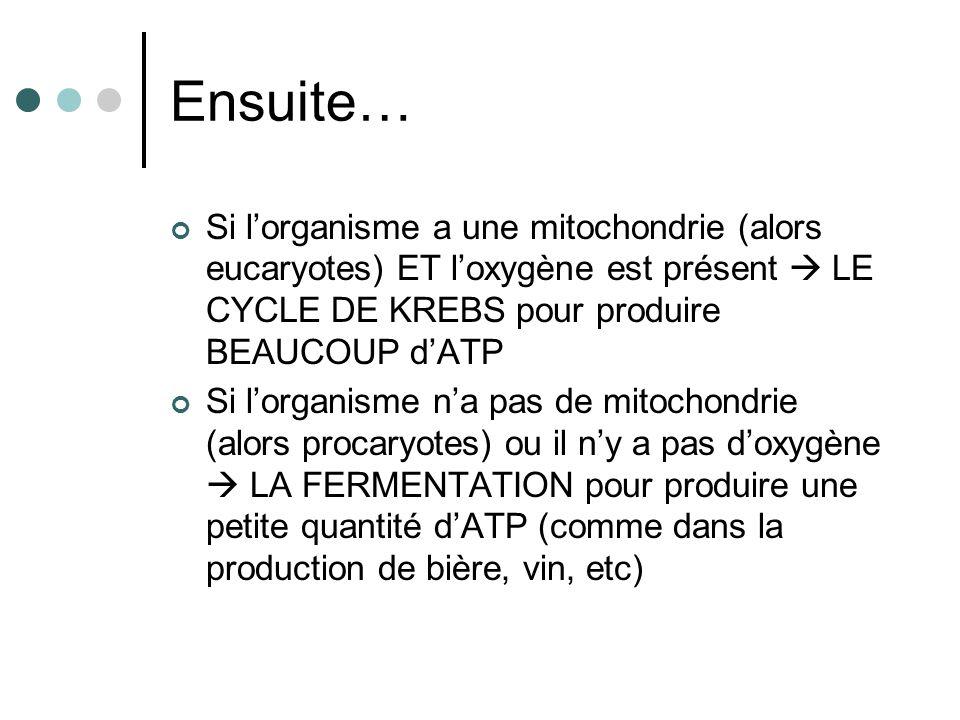 Ensuite… Si l'organisme a une mitochondrie (alors eucaryotes) ET l'oxygène est présent  LE CYCLE DE KREBS pour produire BEAUCOUP d'ATP.