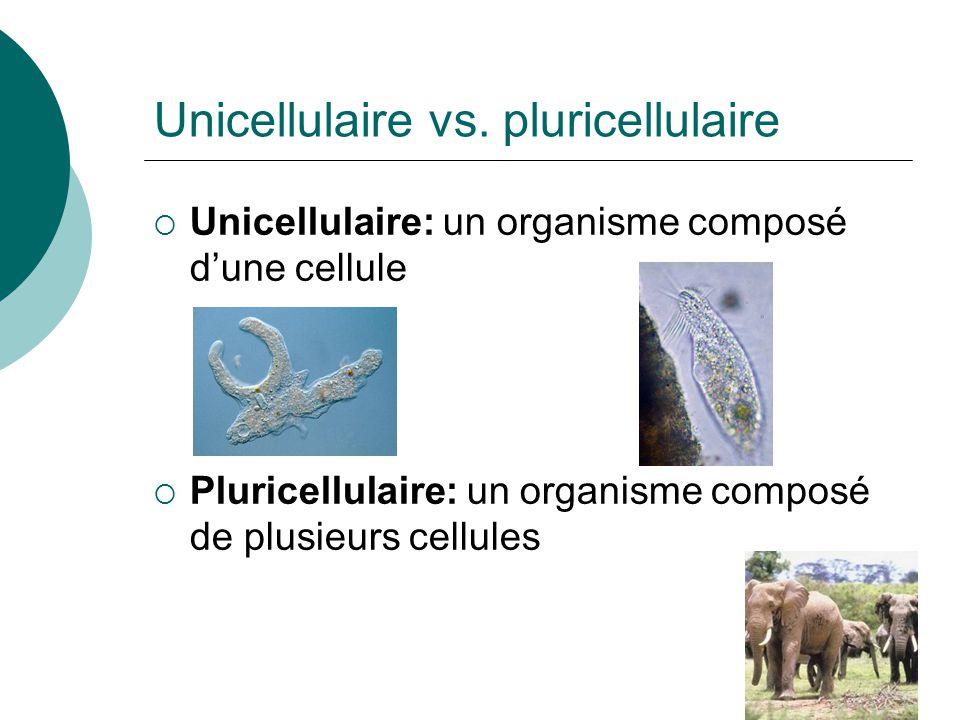 Unicellulaire vs. pluricellulaire
