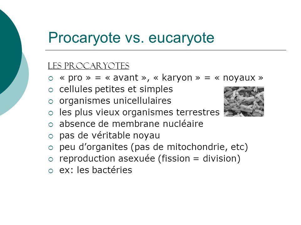 Procaryote vs. eucaryote