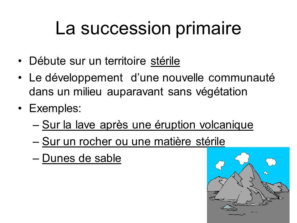 La succession primaire