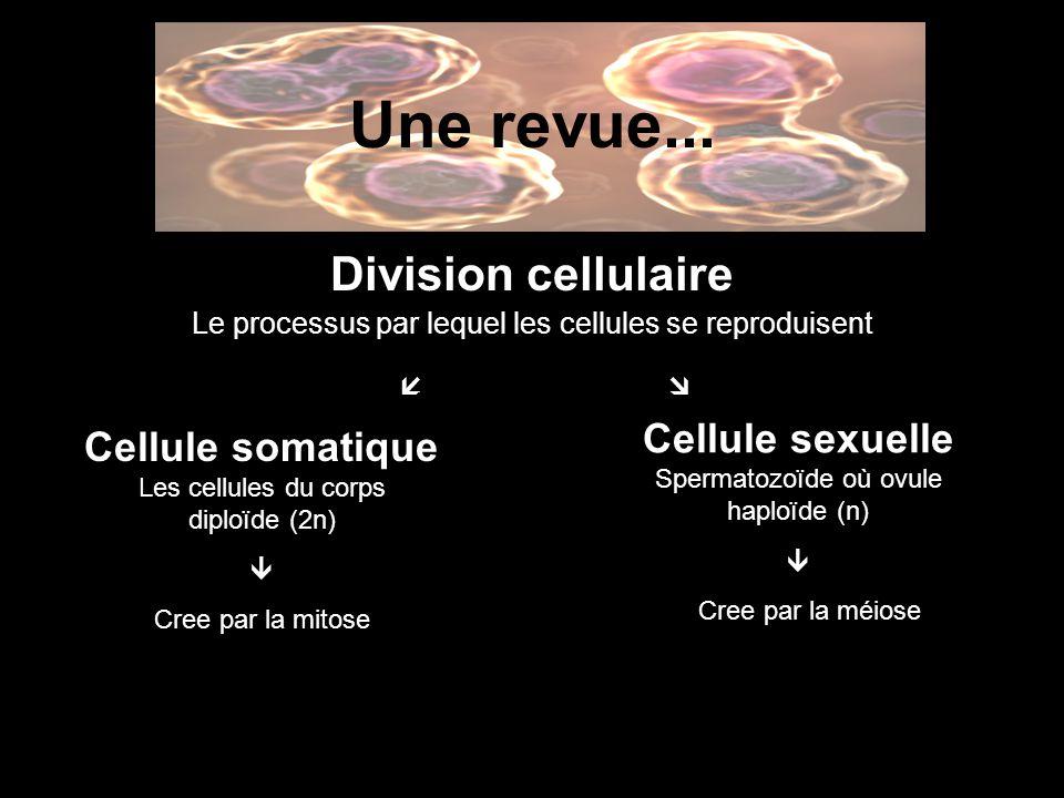 Une revue... Division cellulaire Cellule sexuelle Cellule somatique