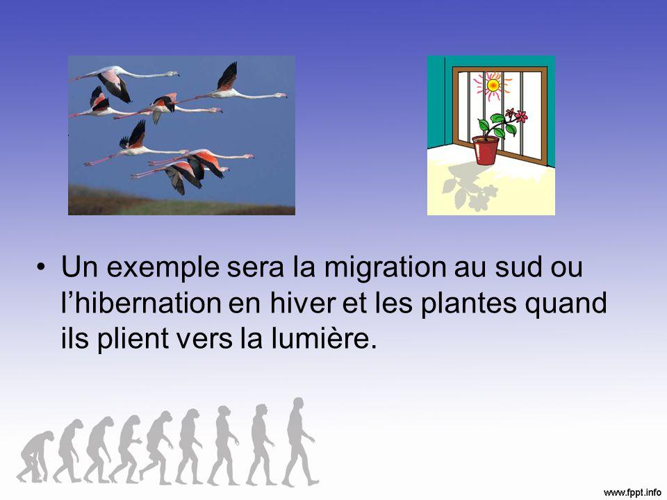 Un exemple sera la migration au sud ou l'hibernation en hiver et les plantes quand ils plient vers la lumière.