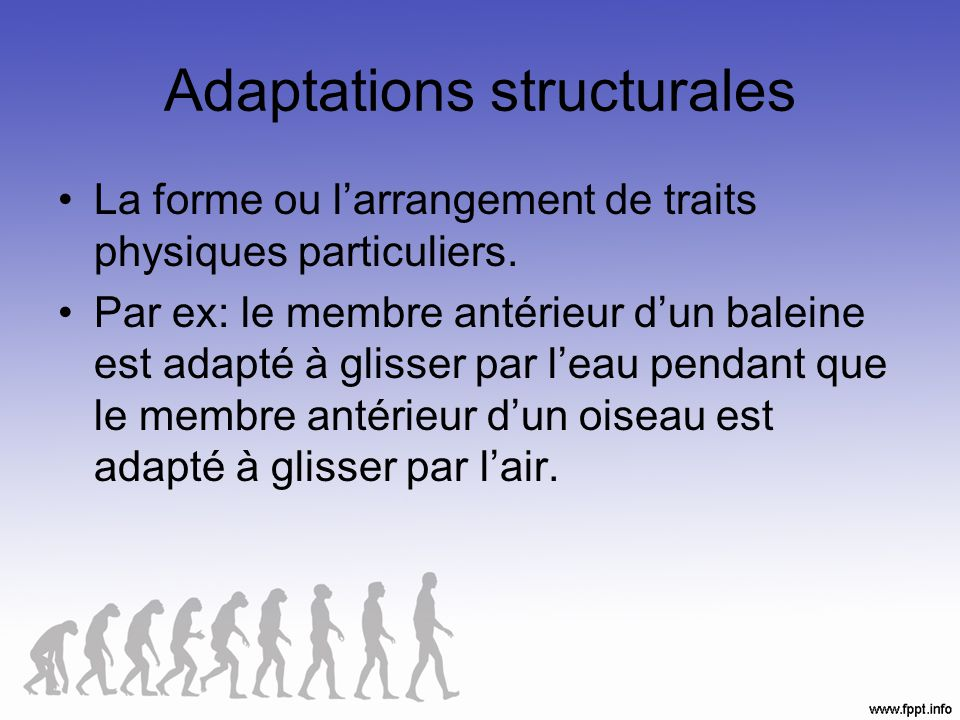 Adaptations structurales