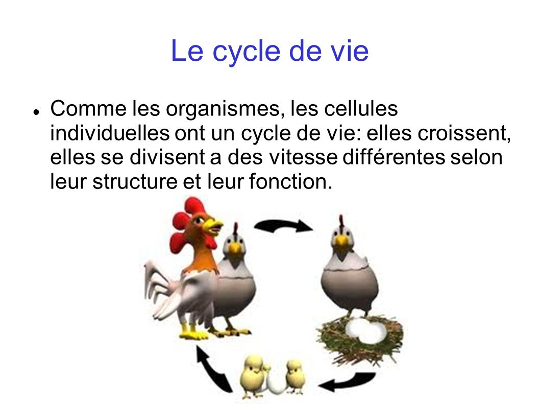 Le cycle de vie