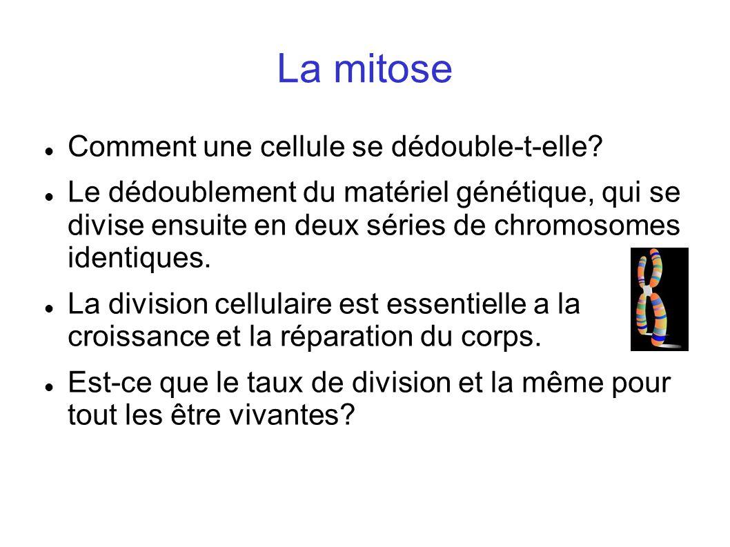 La mitose Comment une cellule se dédouble-t-elle