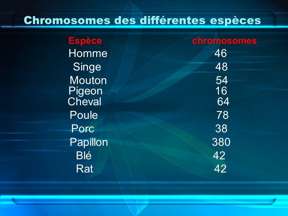 Chromosomes des différentes espèces