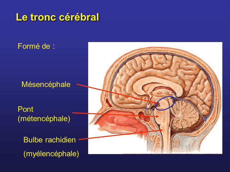 Le tronc cérébral Formé de : Mésencéphale Pont (métencéphale)
