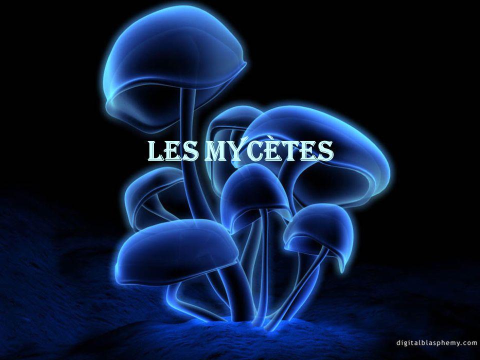 Les Mycètes