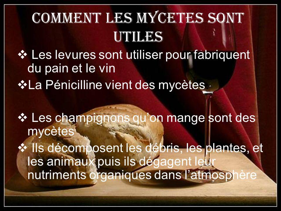 Comment les Mycetes sont utiles