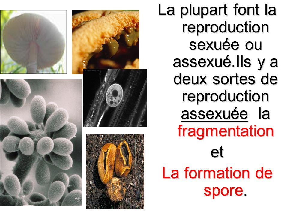 La plupart font la reproduction sexuée ou assexué