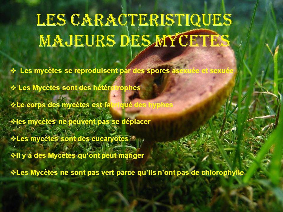 Les Caracteristiques Majeurs Des Mycetes