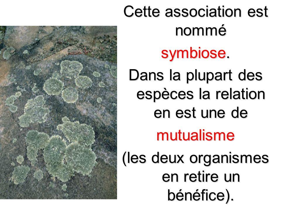 Cette association est nommé symbiose.