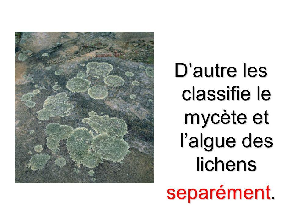 D'autre les classifie le mycète et l'algue des lichens