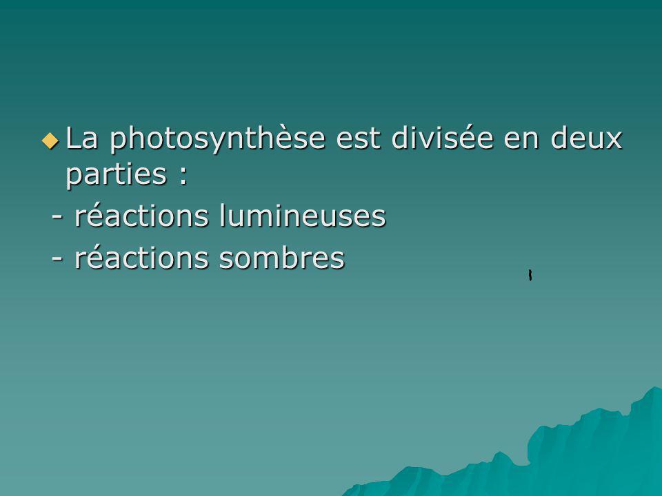 La photosynthèse est divisée en deux parties :