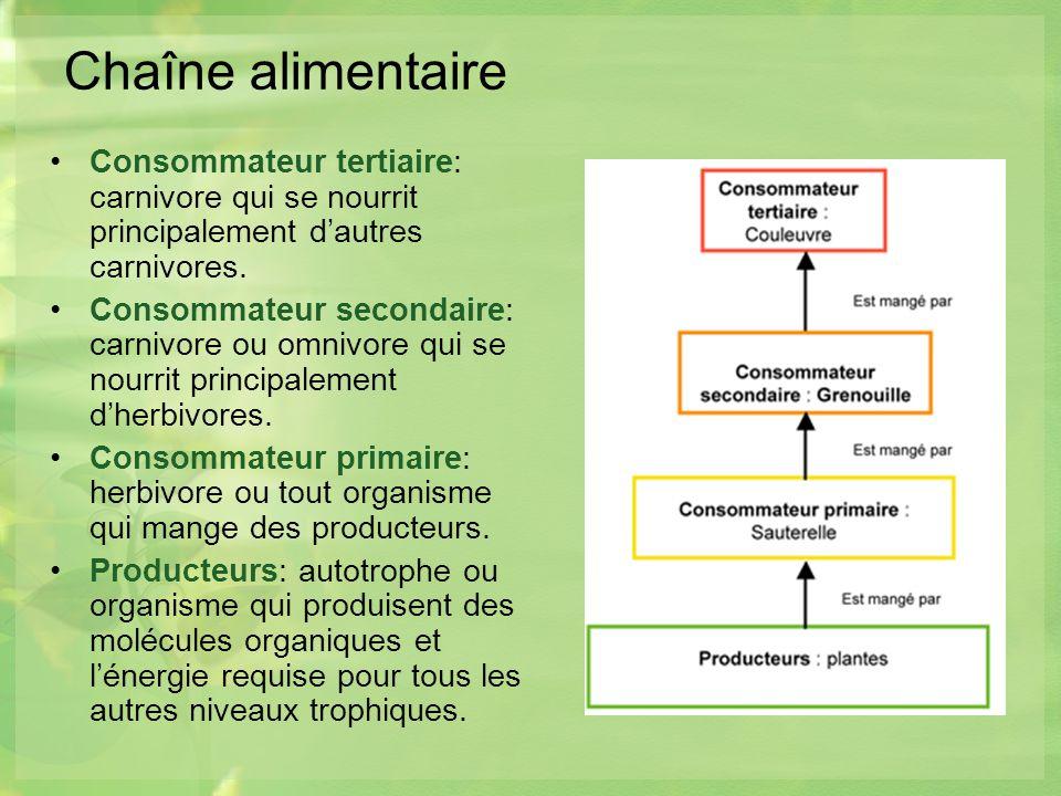 Chaîne alimentaire Consommateur tertiaire: carnivore qui se nourrit principalement d'autres carnivores.