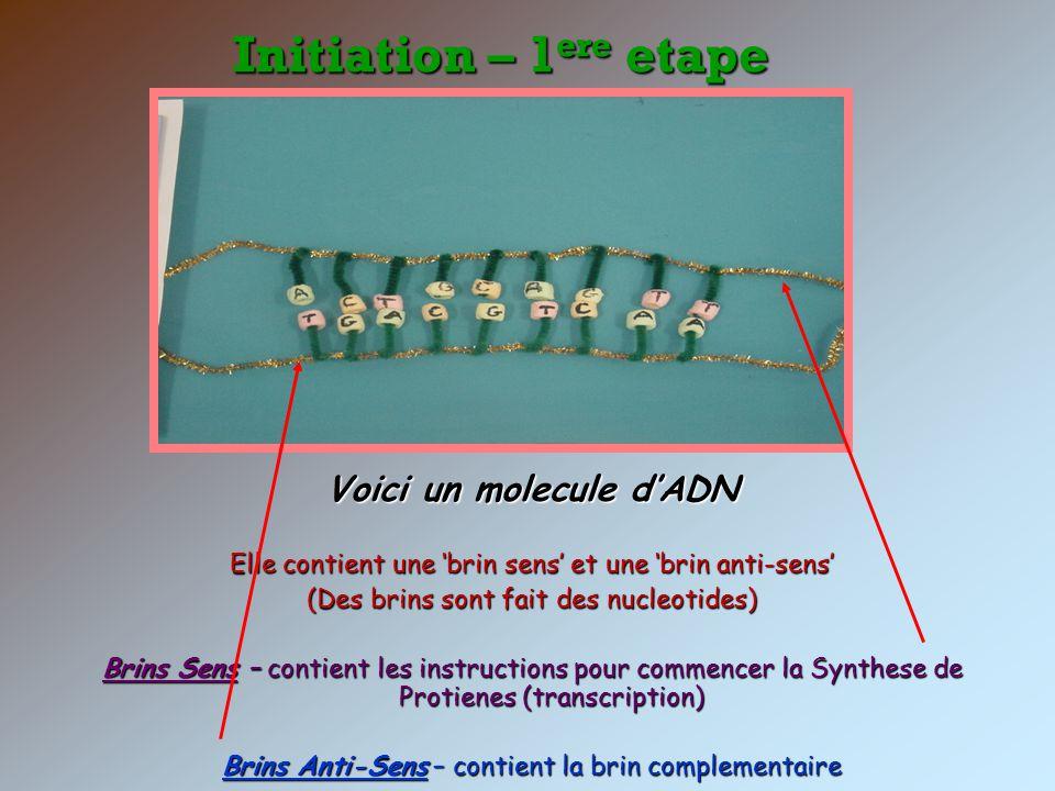 Voici un molecule d'ADN