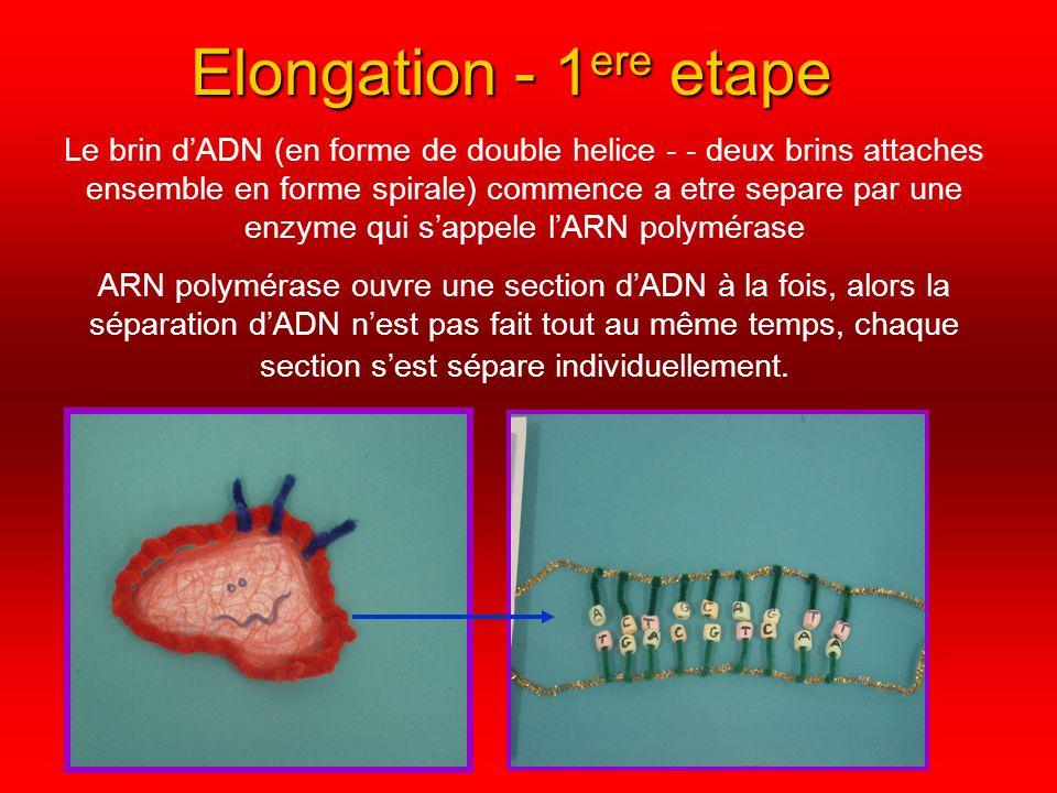 Elongation - 1ere etape