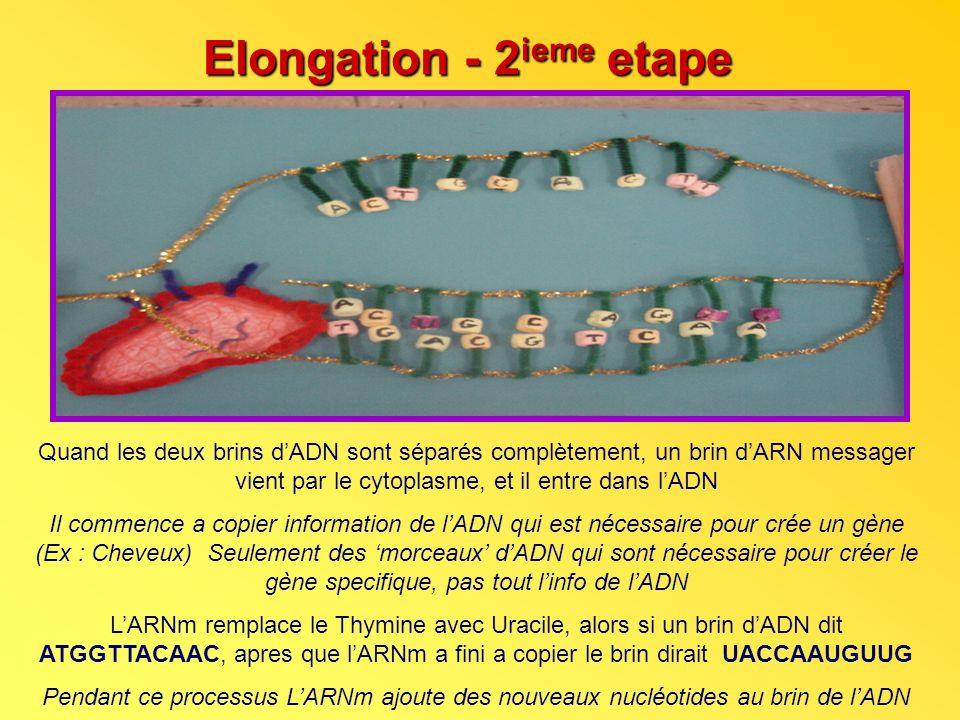 Elongation - 2ieme etape