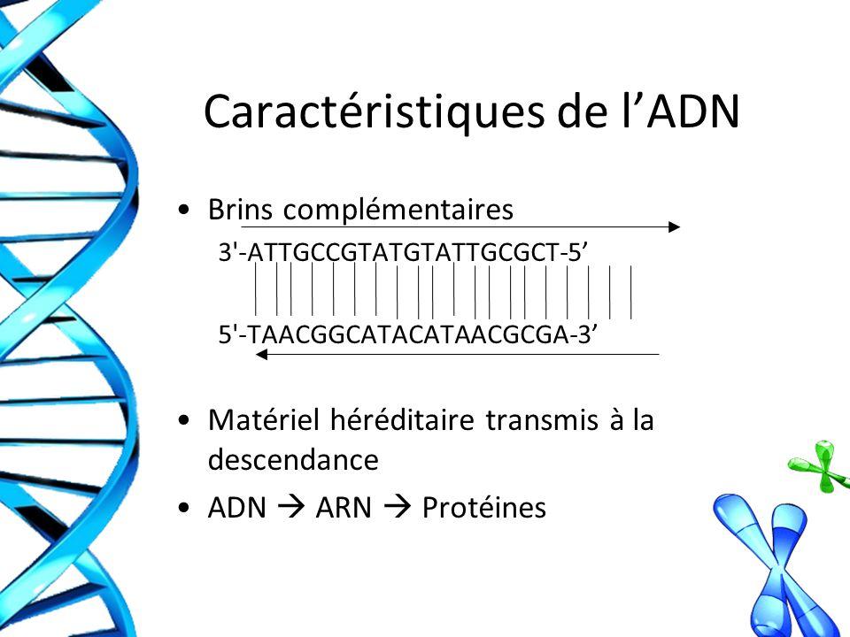Caractéristiques de l'ADN