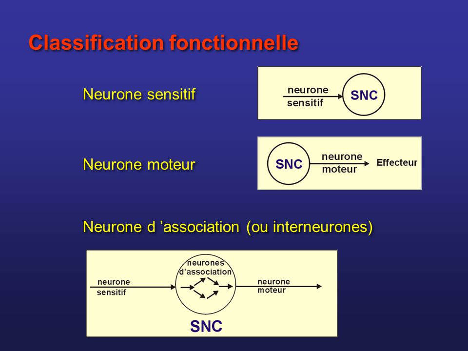 Classification fonctionnelle