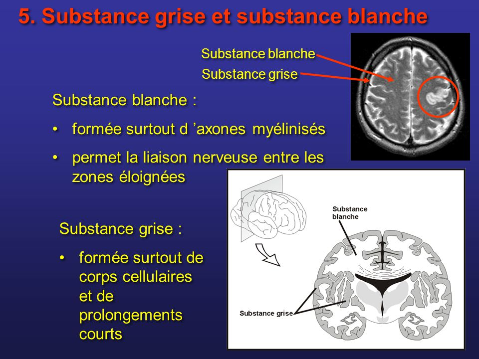 5. Substance grise et substance blanche